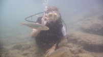 Diving from travel agency